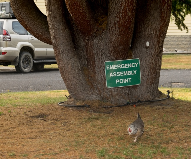 EmergencyAssembly