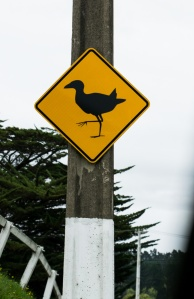 BirdCrossing